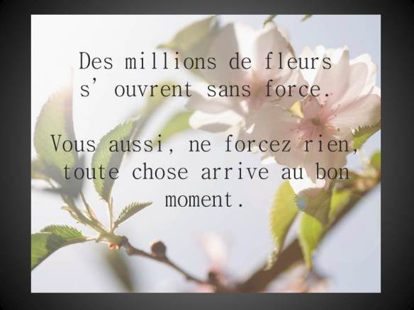 Des millions de fleurs s'ouvrent sans force